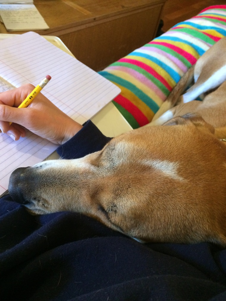 Writing with dog on my lap